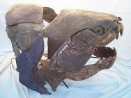 Dunkleosteus sp., a Late Devonian Placoderm Armored Fish from Morocco This armour plated fish grew to 30 feet. The Placondermi family evolved in the Lower Devonian and perished the Lower Carboniferous, leaving no descendants living today.