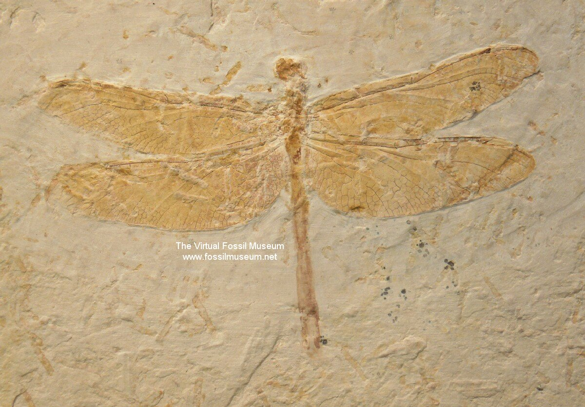Mold Fossils - All About Fossils