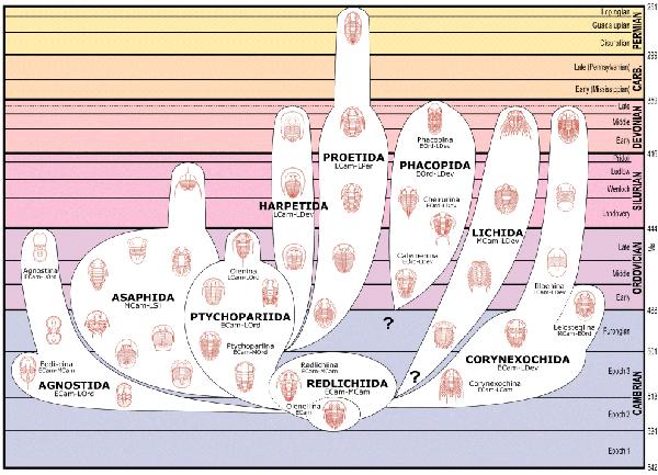 Trilobite Classification - The Nine Orders of Trilobites