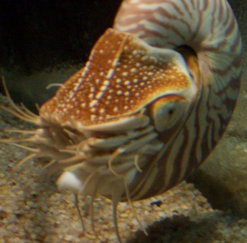 Pictures Of Mollusca 18