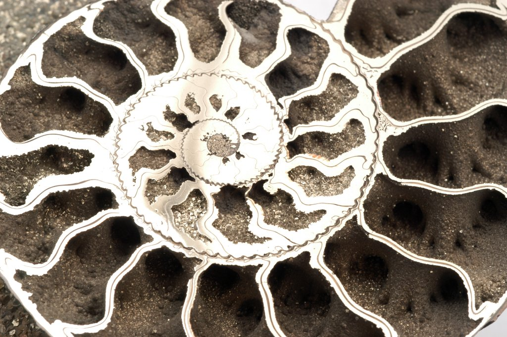 Quenstedticeras Ammonite