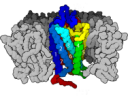 Primordial  G protein-coupled receptor