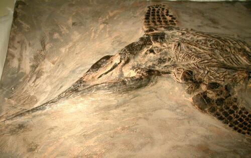triassic ichthyosaur fossil